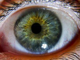 Los ojos de Amira Bibanović