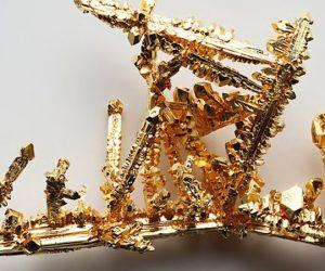 Cupriavidus metallidurans, bacterias capaces de crear oro