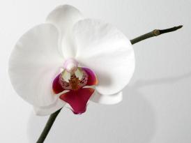 La flor, ese órgano sexual