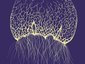 Pintar con sonidos un mundo subacuático: Entrevista con Angélica Castelló