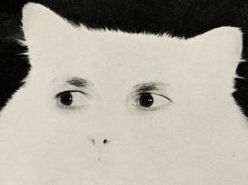The Reanimation Library: una biblioteca de imágenes perdidas