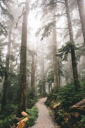 En algún bosque