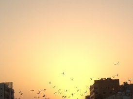 Ashraf Fayadh: un poema